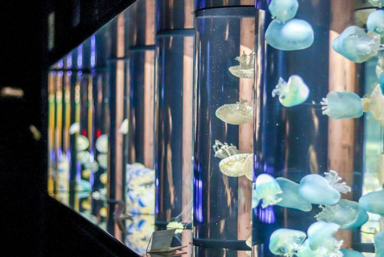 山形県 加茂水族館