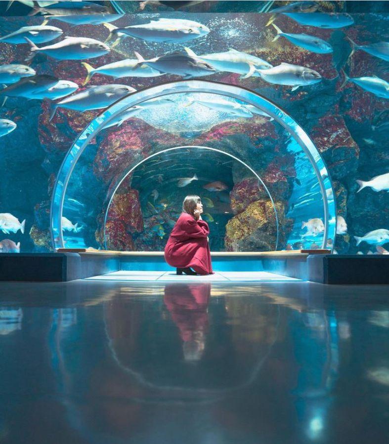 石川県 のとじま水族館